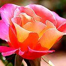 Scott's Rose by FLgirl