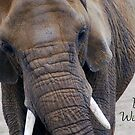 Elephant Birthday Card by Lorna Mulligan