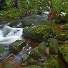 Flowing Moss - Blue Mountains NSW by Mark  Lucey