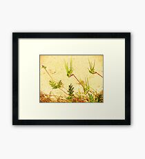 My Weeds, My Abstract Framed Print