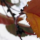 Autumn by Judi Rustage