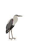 Blue Heron by jcmeyer