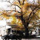 Amilcar Under Oak by Jane Keats
