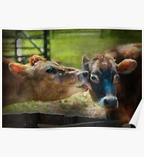Animal - Cow - Let mommy clean that Poster