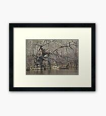 Wicked Cypress Framed Print