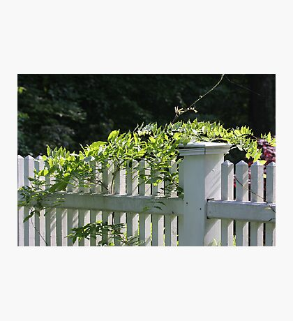 White picket fence being kissed by the sun Photographic Print