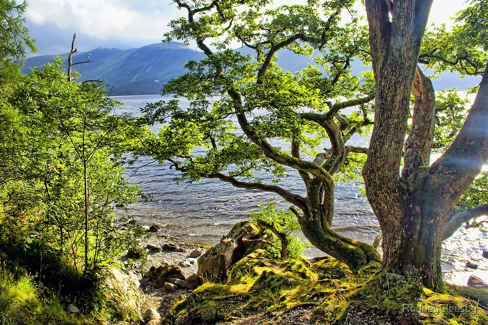 Twisted Tree, Derwent Water, Lake District by RodneyCleasby