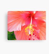 Super Macro Hibiscus Canvas Print