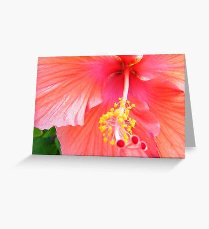 Super Macro Hibiscus Greeting Card