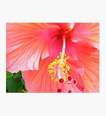 Super Macro Hibiscus Photographic Print