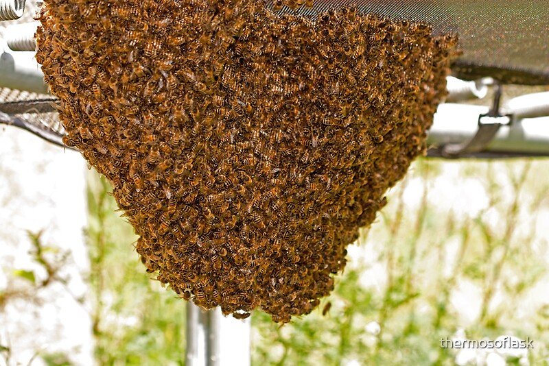 """""""Honey bee nest"""" Posters by thermosoflask Redbubble"""