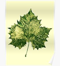 Leaf Collection 1 Poster