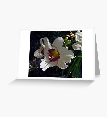 White Day Lillies Greeting Card