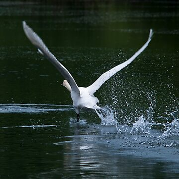 Take-Off by muratodentro