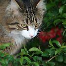 Stalking Kitty by Alexandra Wise-Brogna