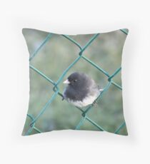 male (slate-colored) Dark-eyed Junco Throw Pillow