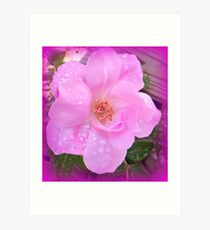 Textured Rose With Raindrops Art Print