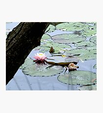 Bush Lily Photographic Print