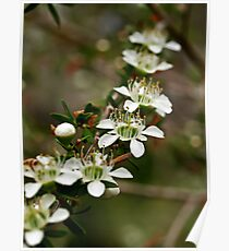 Pretty Little Flowers Poster