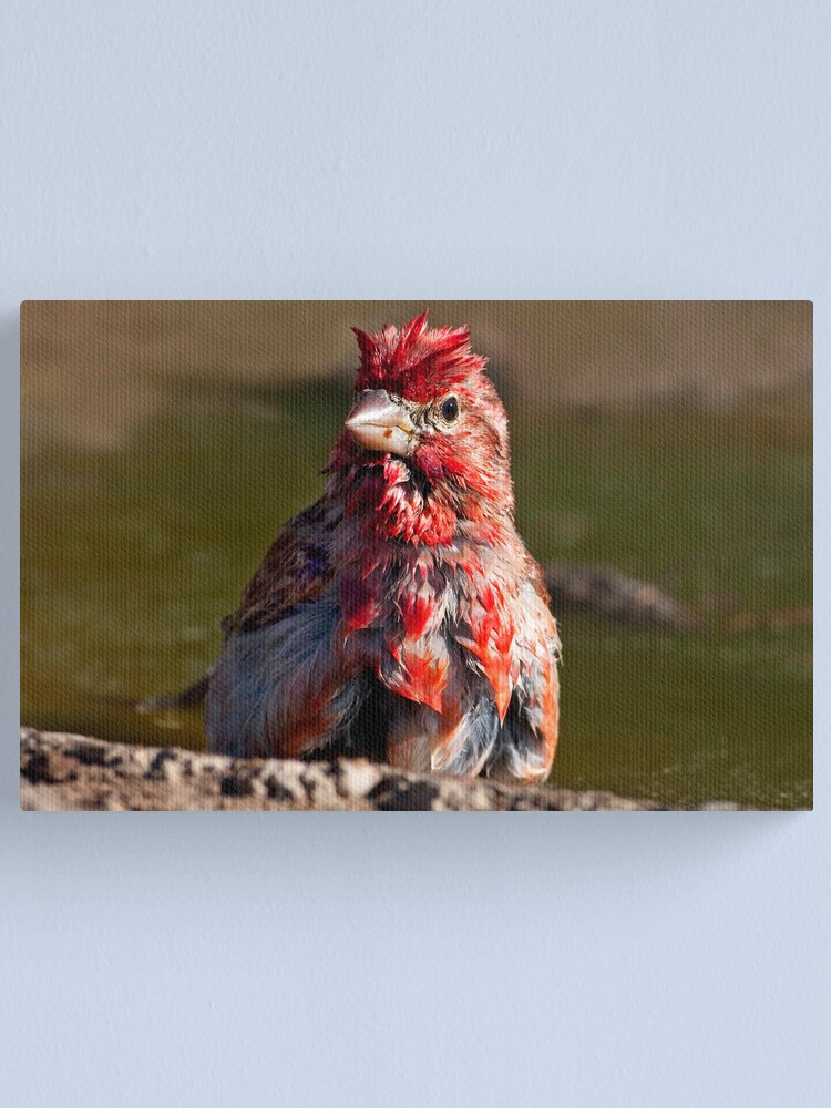 Alternate view of Little Red Rooster Canvas Print