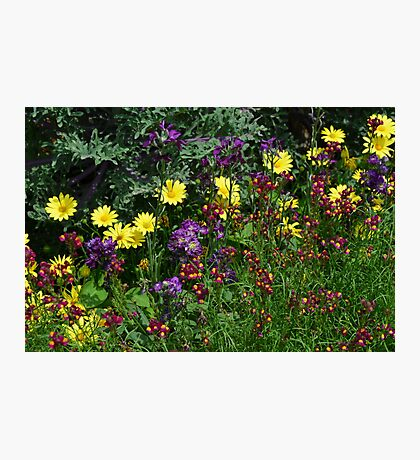 A Pretty Flower Setting in the Garden Photographic Print
