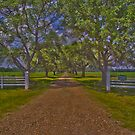 Shady Lane by Jamie  Armbruster