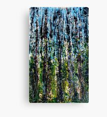 blue forest - Comboyne plateau NSW, Australia Canvas Print