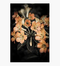 Lovely Flowers Photographic Print