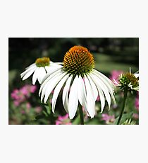 flower garden. Photographic Print