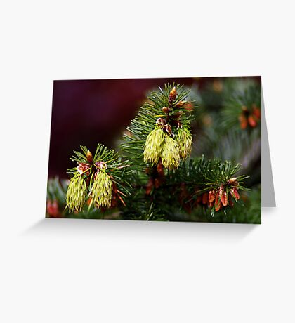 "spring ""cones"" Greeting Card"