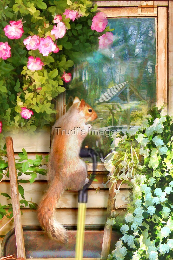 Garden Reflections by Trudi's Images