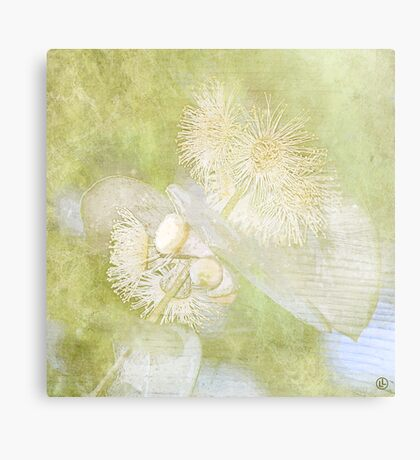 Eucalyptus cinerea Canvas Print