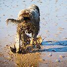 Mud Lovin Spinone by heidiannemorris