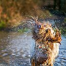 Water Fountain Spinone by heidiannemorris