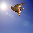 The Dove  by larry flewers