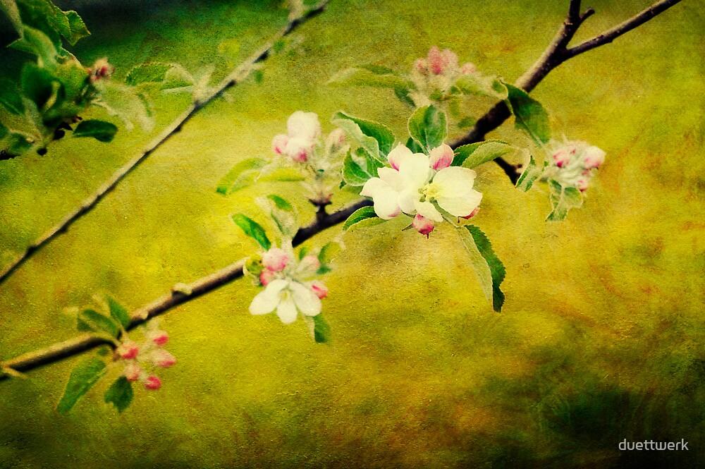 apple blossoms by duettwerk