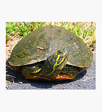Turtle Smile By Jonathan Green Photographic Print