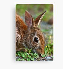 Eastern Cottontail Rabbit Canvas Print
