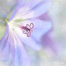 Blue Cranesbill by Beth Mason