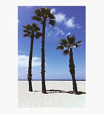 Palm Tree Family Photographic Print