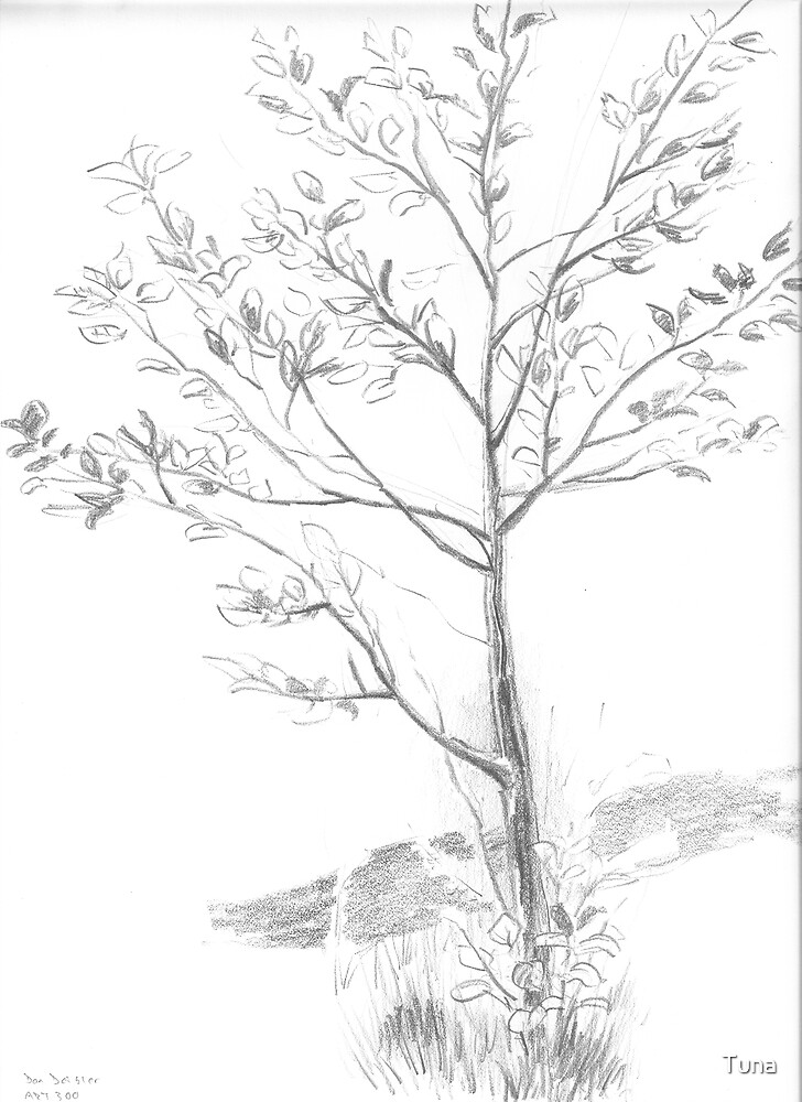 Drawing Day Tree by Tuna