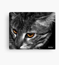 African Wildcat (Felis Silvestris Lybica) Canvas Print