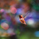 Fliegender Kolibri mit buntem Hintergrund von Peggy Collins