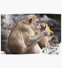 Monkey Island resident Poster