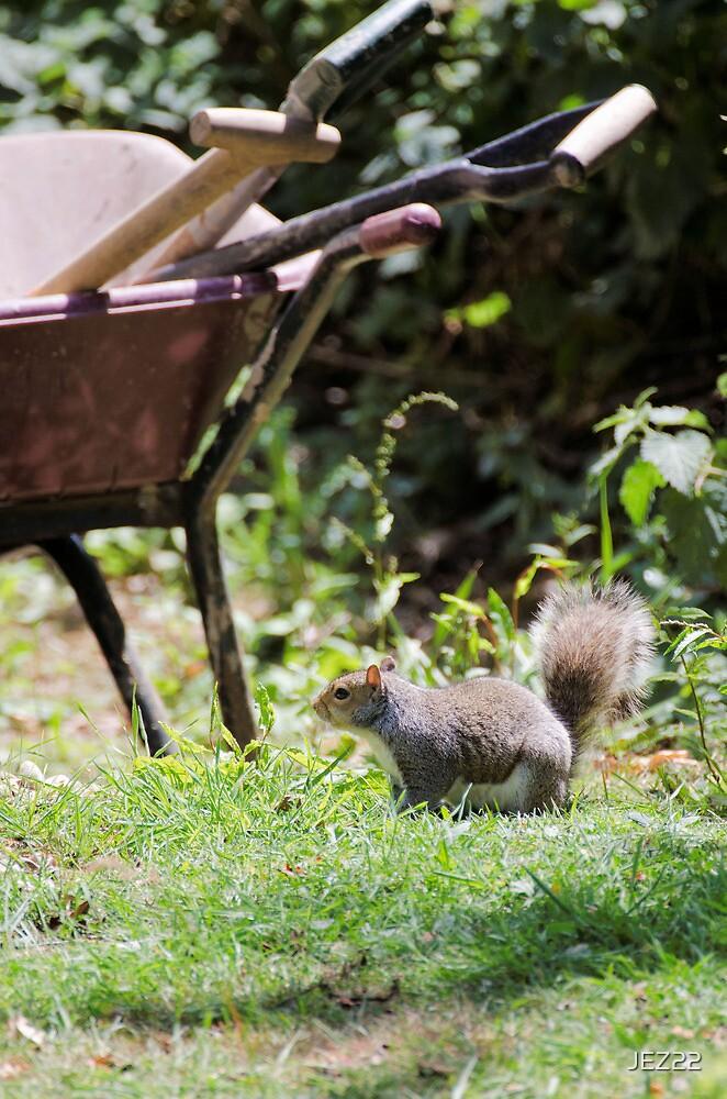 Mr Squirrel by JEZ22