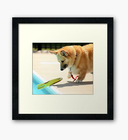 Amazed ! Framed Print