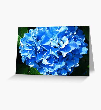 Hydrangea 3 Greeting Card