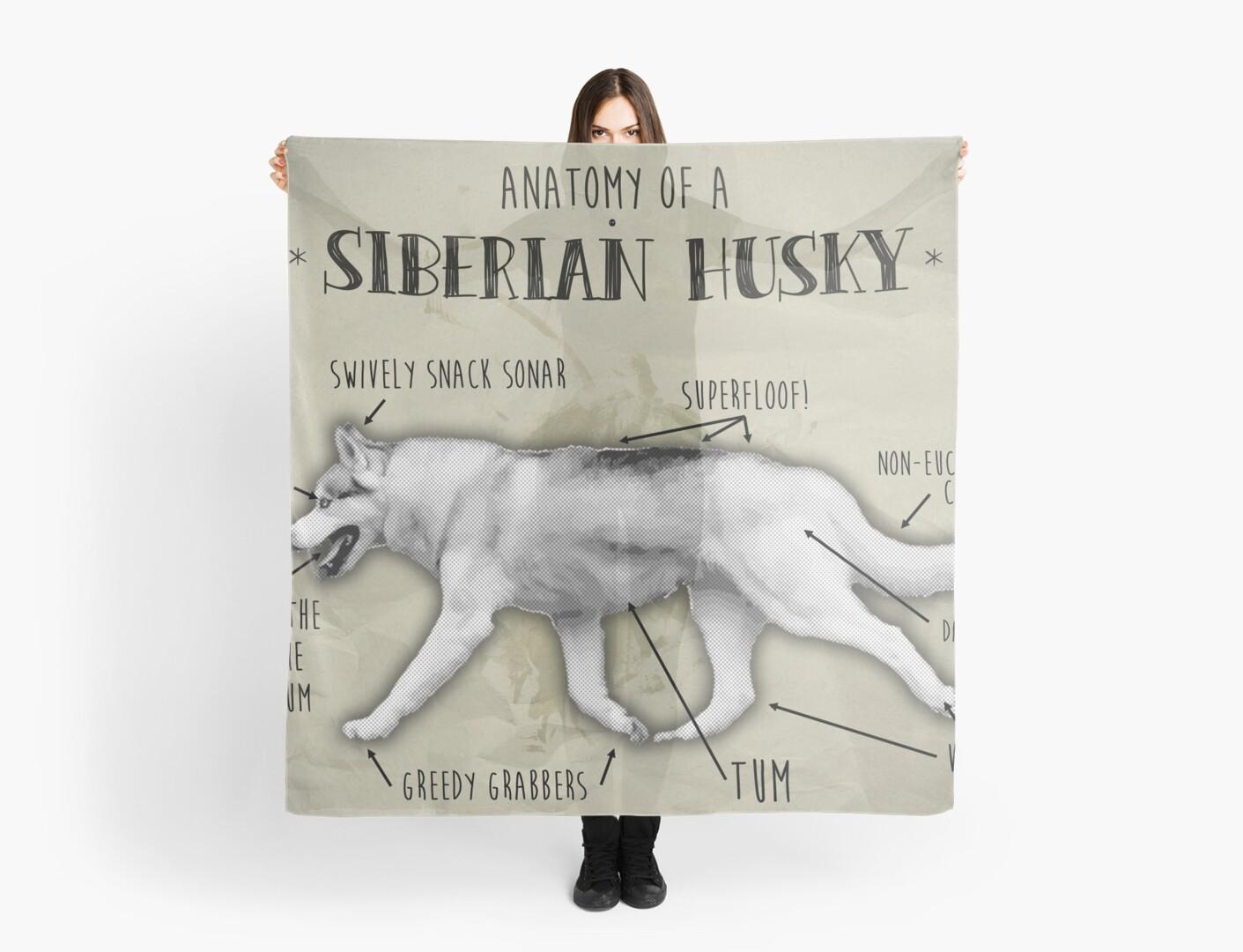 Proper Anatomy of the Siberian Husky\