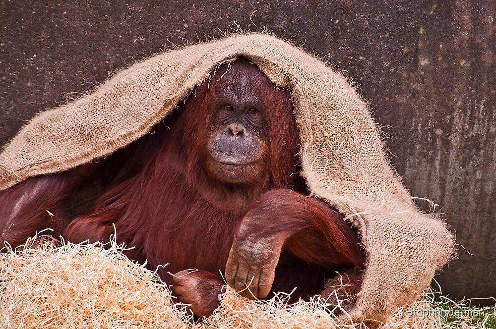 Orangutan by AttiPhotography