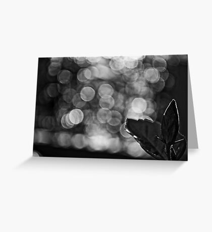 When B&W is Bokeh...: On Featured work: The-women-photographer Group Greeting Card
